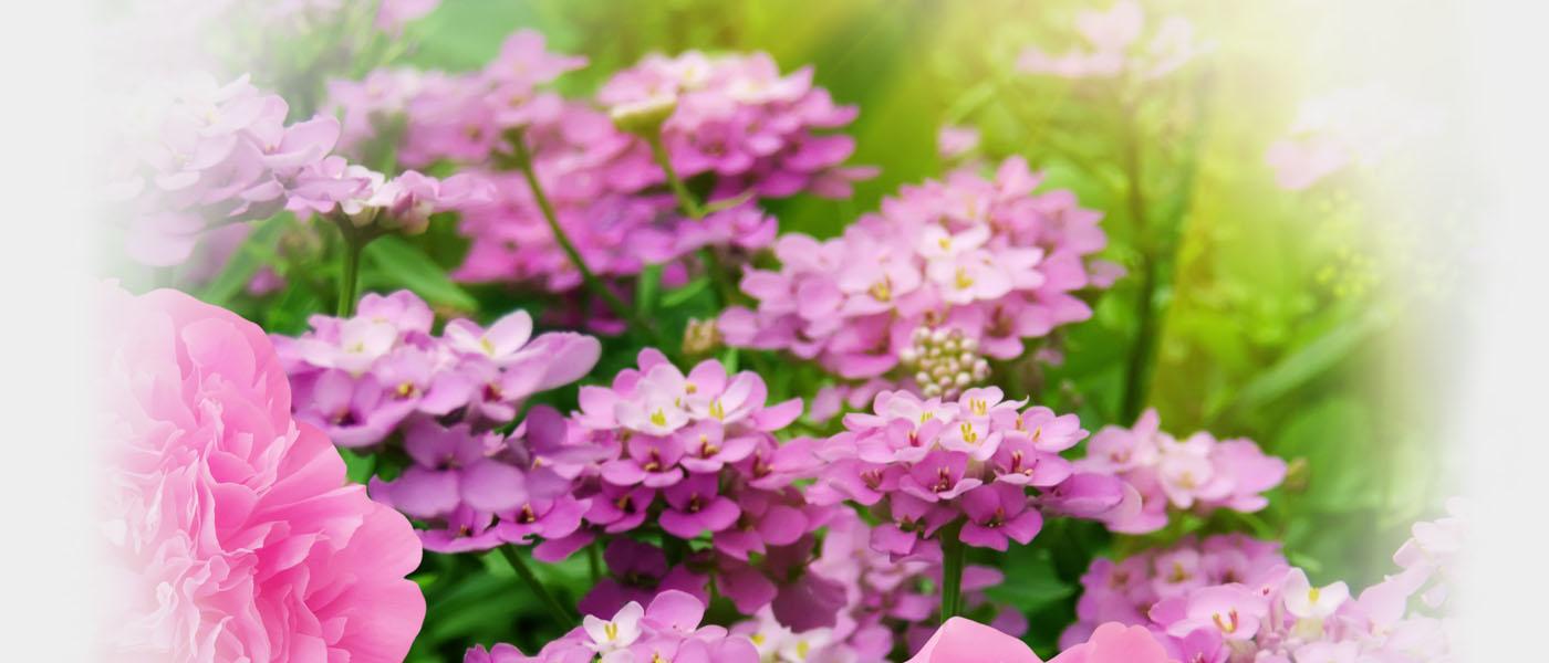 Florin Ogrodnictwo Kwiaty Balkonowe Najpiękniejsze Kwiaty