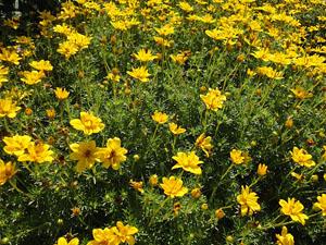 Florin Ogrodnictwo Kwiaty Balkonowe Najpiekniejsze Kwiaty Balkonowe Slupsk Siemianice